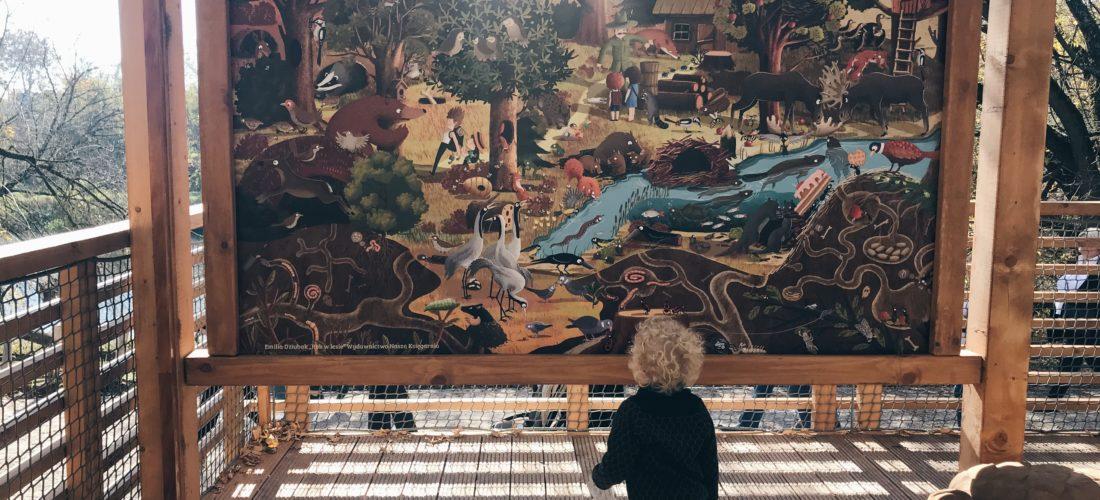 Plac zabaw Pomiechówek – najpiękniejszy leśny plac zabaw na Mazowszu