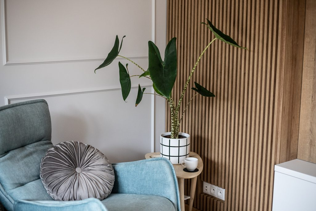 zdjęcie fotela a obok kwiatek. Ilustracja do wpisu kolory ścian